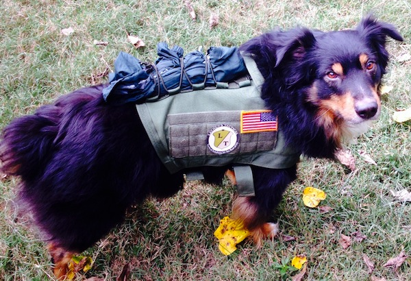 Laymen's Tactical Review of ForceK9's TACVest